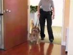 Video: Sterbender möchte zum letzten Mal seinen Hund sehen, den er bei seiner Notaufnahme hatte abgeben müssen