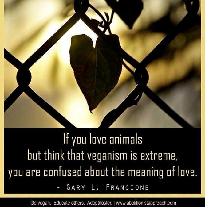 """""""Wenn Sie Tiere lieben, aber denken, dass Veganismus extrem sei, dann ist Ihre Interpretation von Liebe sehr verworren."""""""