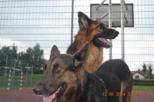 Bruno und Trufa