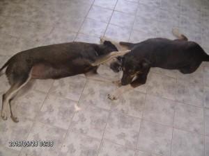 Suzy beim Spielen TierseelenHoffnung