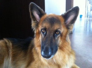 Bruno7